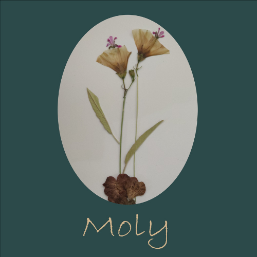 Moly The Art of Pressed Flowers